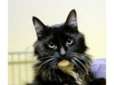 Adopt Felix The Fearless Fraggle -- HCM AdoptableHospice a Black & White or
