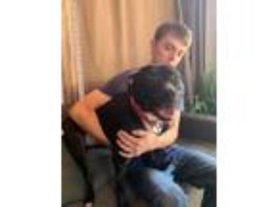 Adopt Peyton Society - VERY child & dog friendly, active a Pit Bull Terrier
