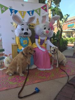 Florida's Premier Easter Bunnies