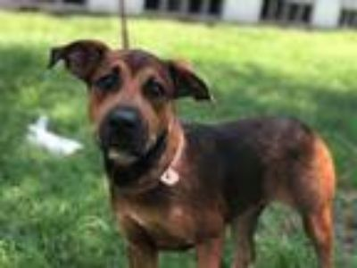 Adopt Chelsea a Terrier