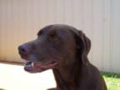 Adopt Reese a Brown/Chocolate Mixed Breed (Medium) / Mixed dog in Athens