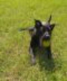 Charlie Hunnam Black Labrador Retriever Dog