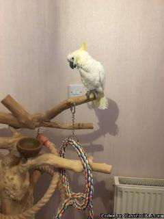 Accessible Cockatoo bird