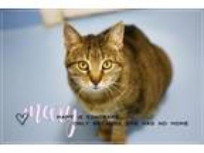 Adopt MARY-OUR FEATURED CAT a Domestic Short Hair