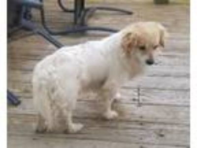 Adopt Melvin Foster Needed 6/22 a Spaniel