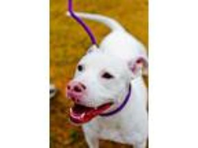 Adopt Ruby Red a White Mixed Breed (Large) / Mixed dog in Chamblee