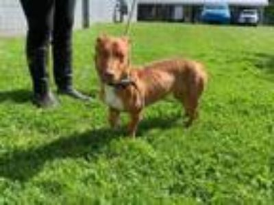 Adopt Teddy a Mixed Breed