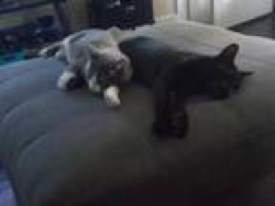 Midnight And Greyson