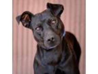 Adopt Hedges a Mixed Breed