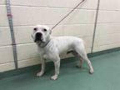 Adopt SNOWMAN a White - with Black Mixed Breed (Medium) / Mixed dog in Memphis