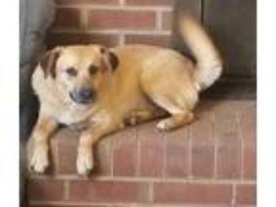 Adopt Zora a Spaniel (Unknown Type) / Mixed dog in Thomasville, NC (24781996)