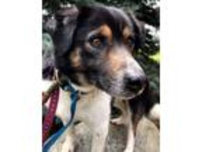 Adopt LEWIS a Black - with White Border Collie / Mixed dog in Elyria