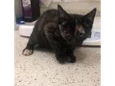 Adopt Treasure a All Black Domestic Shorthair cat in Auburn, AL (25273496)