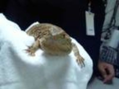 Adopt a Lizard / Mixed reptile, amphibian, and/or fish in Charlotte