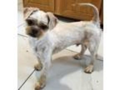 Adopt Mr. Grouse a Terrier