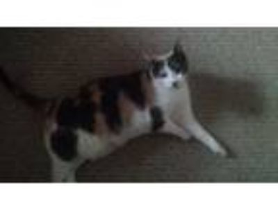 Adopt Jingles a Calico or Dilute Calico Domestic Shorthair cat in Newton Grove