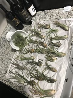 Air plants! Prices range from 2 to 5 dollars each! Message me for details...