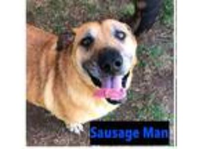 Adopt Sausage Man a Corgi / Shepherd (Unknown Type) dog in San Diego