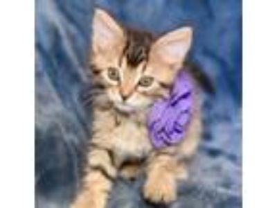 Adopt JASMINE a Domestic Medium Hair