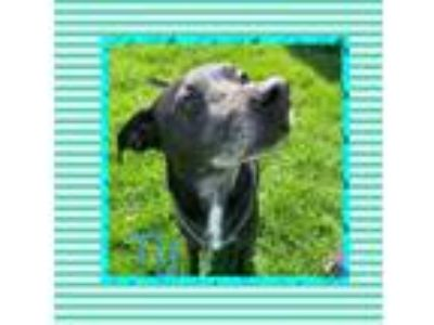 Adopt Ty (Senior Citizen Star) a Terrier, Hound
