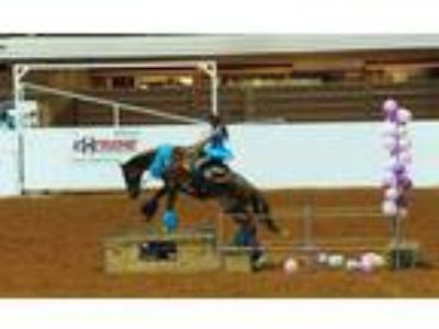 Extreme Mustang Makeover gelding