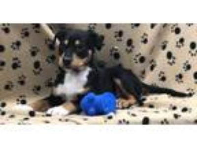 Adopt Cameron a Black Terrier (Unknown Type, Small) / Mixed dog in Elkhorn