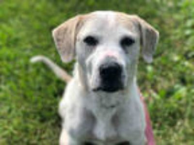 Dogs for Adoption Classifieds in Mahomet, Illinois - Claz org