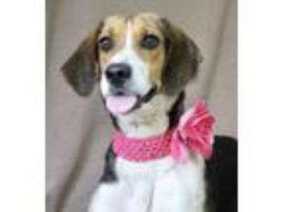Adopt Sally Mae a Black Treeing Walker Coonhound / Mixed dog in Picayune