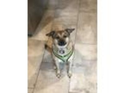 Adopt Reggie a Tan/Yellow/Fawn - with Black Terrier (Unknown Type
