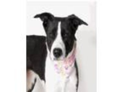 Adopt Nellie a Border Collie, McNab
