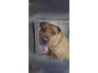 Adopt JR a Shar Pei / Mixed Breed (Medium) / Mixed dog in Rome, GA (25872264)