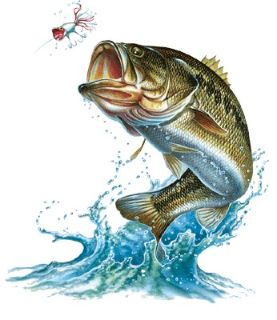 Bass Fishing 101 - How to Land The Next Big One