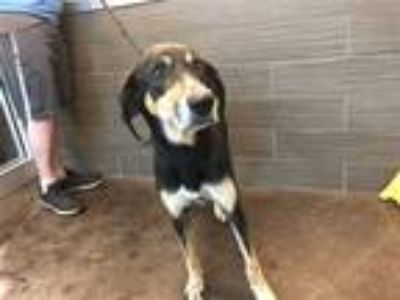 Adopt Daisy a Hound (Unknown Type) / Mixed dog in Norman, OK (25323569)