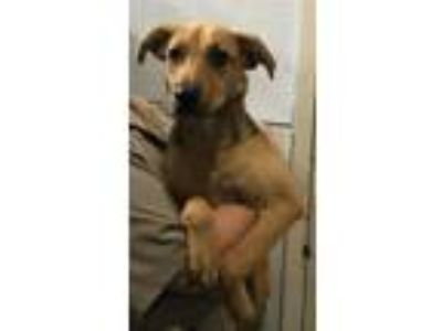 Adopt 19-07-2102 Mariah a German Shepherd Dog / Mixed dog in Dallas