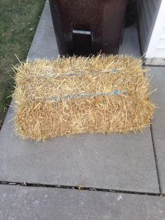 Free hay...first come first serve!