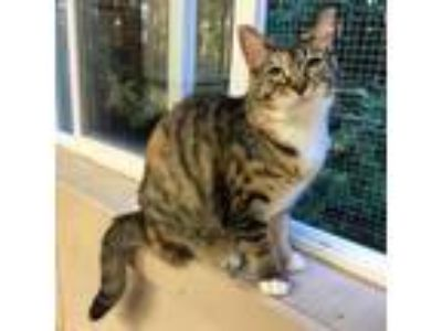 Adopt Samantha a Domestic Medium Hair