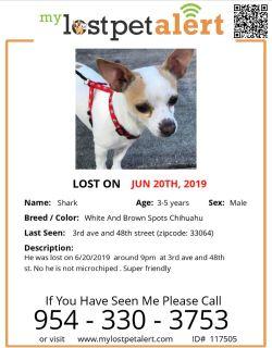 Chihuahua LOST