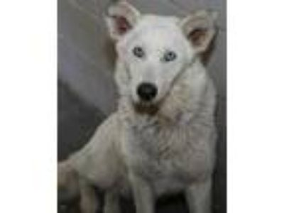 Craigslist - Dogs for Adoption Classifieds in Smiths Grove