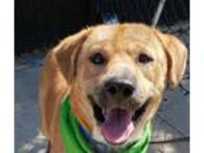 Adopt FERGIE a Tan/Yellow/Fawn - with White Mixed Breed (Medium) / Mixed dog in