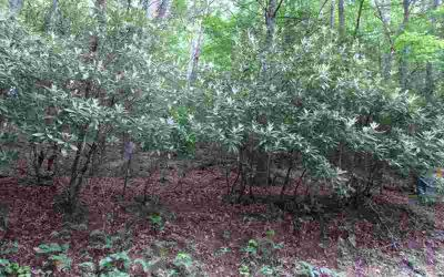 Trt 1 Spiva Cove Mnt. Rd. Blairsville, Wooded lot with lots