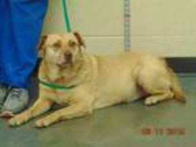 Adopt MEE MAW a Brown/Chocolate Mixed Breed (Medium) / Mixed dog in Memphis