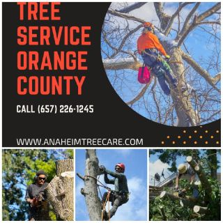 Anaheim Tree Care – A One Stop Tree Care Solution