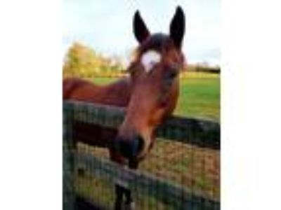 Adopt Sable a Thoroughbred
