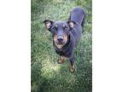 Craigslist - Dogs for Adoption Classified Ads in Nampa