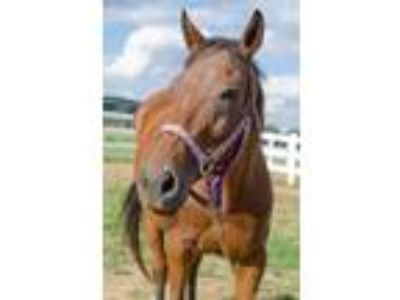 Adopt Frenchy a Thoroughbred
