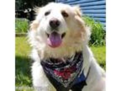 Adopt Emma in NY - new! a Great Pyrenees