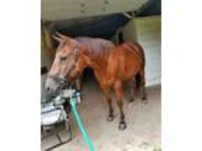 Horse For Lease Eagle WI