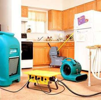 GreenStar Pro Carpet Cleaning, Water Damage, Mold Removal Vernon Hills, Libertyv