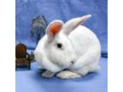 Adopt Cowgirl a New Zealand, Bunny Rabbit
