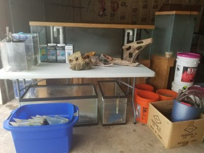 12 FISH TANKS & MANY SUPPLIES* 125 GALLON INCLUDED!